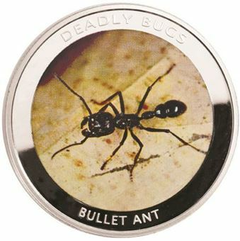 Picture of Zambia, Bullet Ant