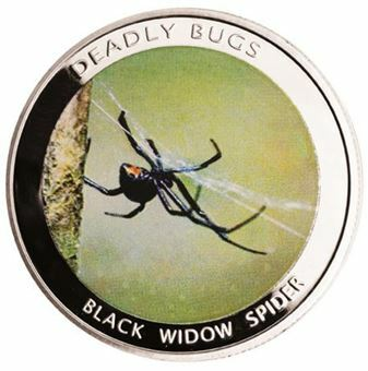 Picture of Zambia, Widow Spider
